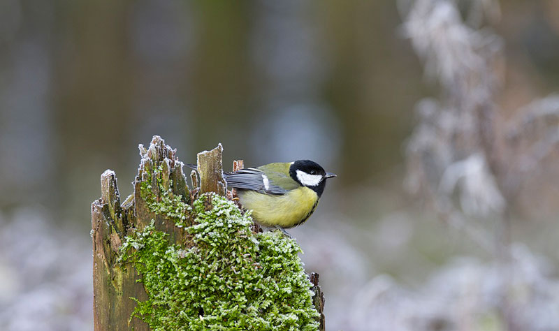 piege photographique oiseaux